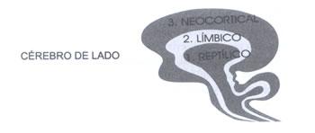 El Cerebro Triuno